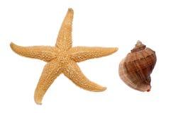 Zeester en Zeeschelp Royalty-vrije Stock Afbeeldingen
