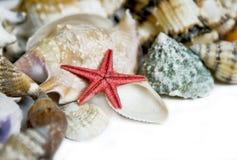 Zeester en zeeschelpen stock afbeelding