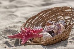 Zeester en zeeschelpen in mand op zandstrand Stock Foto's