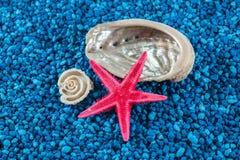 Zeester en zeeschelpen op blauwe achtergrond stock afbeelding