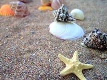 Zeester en zeeschelpen op een zandig strand royalty-vrije stock afbeelding