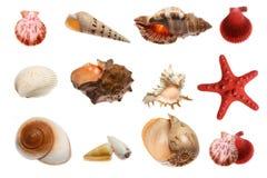 Zeester en zeeschelpen op wit Stock Afbeeldingen