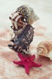 Zeester en zeeschelpen op witte achtergrond royalty-vrije stock foto
