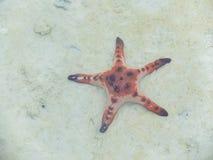 Zeester in het overzees Stock Foto