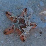Zeester in het overzees! stock fotografie