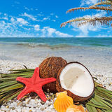 Zeester, kokosnoten en palm royalty-vrije stock afbeelding