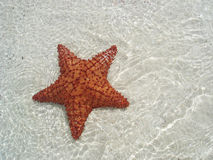 Zeester onderwater Royalty-vrije Stock Fotografie