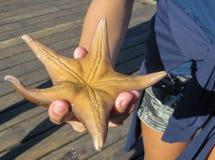 Zeester op de palm van de hand, op de kust van de Vreedzame Oceaan September 2015 Vancouver stock afbeeldingen
