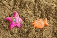 Zeester op een strandstuk speelgoed Royalty-vrije Stock Foto