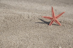 Zeester op een zandig strand Royalty-vrije Stock Afbeeldingen