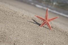 Zeester op een zandig strand Stock Foto