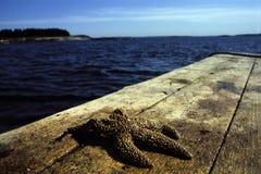 Zeester op het Spoor van de Boot van de Zeekreeft Stock Afbeeldingen