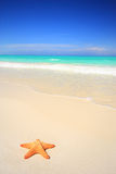 Zeester op het strand Stock Foto's