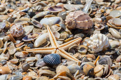 Zeester op het strand Stock Fotografie