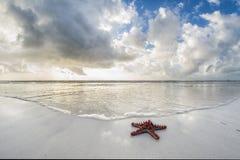 Zeester op het strand Stock Afbeelding