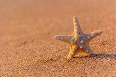 Zeester op het strand in de zomer Stock Afbeeldingen