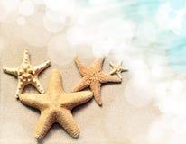Zeester op het strand Het strand van de zomer stock afbeeldingen