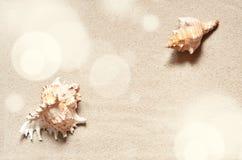 Zeester op het strand Het strand van de zomer royalty-vrije stock afbeelding