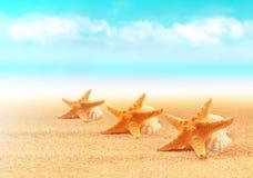 Zeester op het strand Het strand van de zomer royalty-vrije stock foto