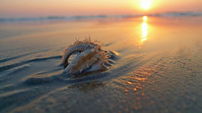 Zeester op het strand, in het zand wordt begraven dat. Royalty-vrije Stock Afbeeldingen