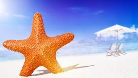Zeester op het Tropische Concept van de strandvrijheid royalty-vrije stock foto