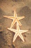 Zeester op het zand Stock Foto
