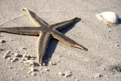 Zeester op het zand Stock Afbeeldingen