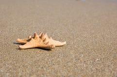 Zeester op het zand Royalty-vrije Stock Foto's