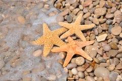 Zeester op rotsachtig strand Stock Afbeelding
