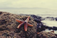 Zeester op rotsachtige kust Royalty-vrije Stock Foto