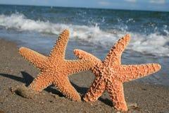 Zeester op Strand royalty-vrije stock afbeeldingen