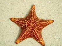 Zeester op strand stock fotografie