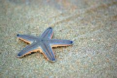 Zeester op strand Stock Afbeeldingen