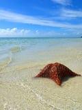 Zeester op tropisch strand stock foto