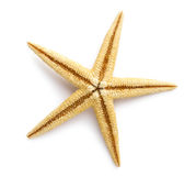 Zeester, Overzeese sterren en shells. Stock Foto's