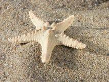 Zeester op zand Stock Afbeelding