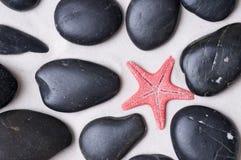 Zeester op zwarte kiezelstenen Royalty-vrije Stock Afbeelding