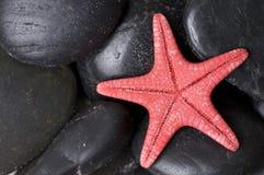 Zeester op zwarte kiezelstenen Stock Afbeeldingen