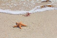 Zeester (overzeese ster) op zandig strand Stock Foto's