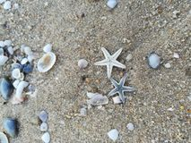 Zeester, shell, overzees, strand stock foto's