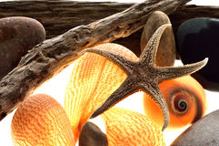 Zeester, Shell, spiraal, marine Stock Afbeelding