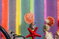 Zeester, shells die, het duiken masker, op een gekleurd verstand liggen als achtergrond Stock Foto