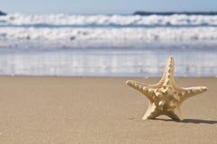 Zeester in zand. Stock Afbeeldingen