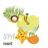 Zeester, zeeschelpen, overzeese stenen en palmbladen Baner voor kuuroord, hotel, kaart Stock Afbeeldingen