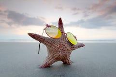 Zeester in zonnebril op strand Stock Afbeeldingen