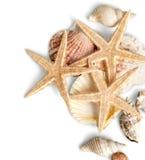 Zeesterren en shells op een wit worden geïsoleerd dat Stock Foto's