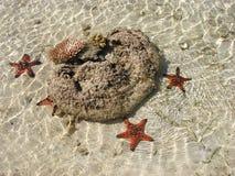 Zeesterren in het Overzees Royalty-vrije Stock Foto