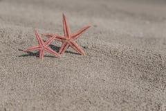 Zeesterren op een zandig strand Royalty-vrije Stock Foto's