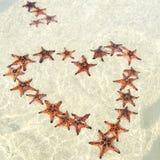 Zeesterren op het eiland van Phu quoc met hartvorm, mooie rode zeester in glasheldere overzees stock foto's