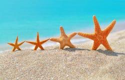 Zeesterren op het strand Stock Foto